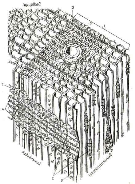 Схема микроскопического